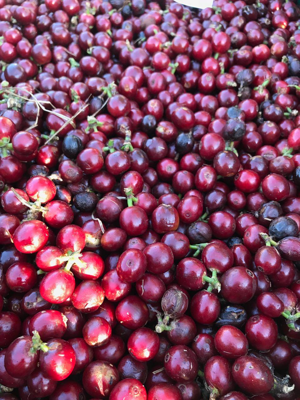 Frutos vermelhos maduros e saudáveis